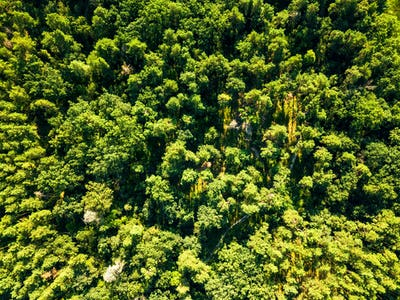 Green natural foliage forest in summer sunny day. Aerial view from the drone. Natural background