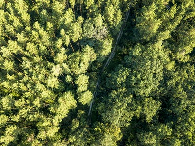Top view of a dirt road through a green forest on a sunny afternoon. Aerial view from the drone