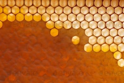 Fresh organic honey in wax comb. Macro photo of organic product. Flat lay