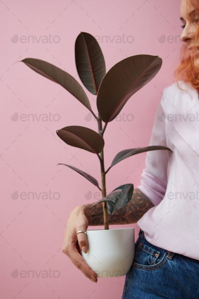 Red-haired happy girl with a tattoo holding a flowerpot with a ficus plant on a pink background with