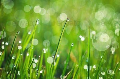 Macro of dew