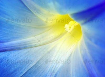 Macro of blue flower