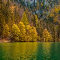 Autumn forest trees reflecting in lake