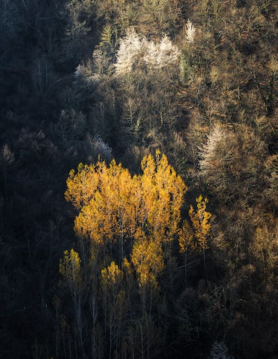 Tender yellow shoots in the poplars and white flowers in the che