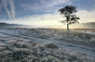 sunrise over frosted meadow on cold morning