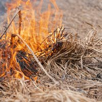 Dry Grass Burning in Meadow at Springtime. Fire and Smoke Destroy All Wildlife