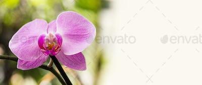 Beautiful purple Orchid flowers, macro view selective focus.