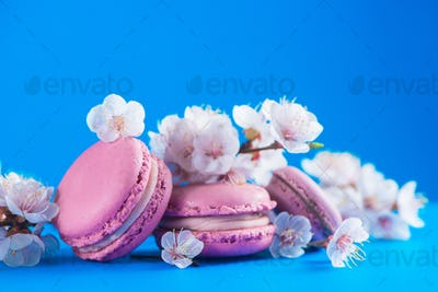 French macaron cookies header with cherry blossom flowers on a sky blue background with copy space