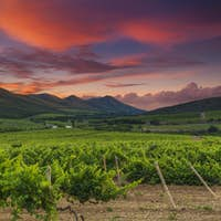 Panoramic view of a vineyard in the Tuscan countryside