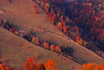 Beautiful autumn forest in the mountains at sunset