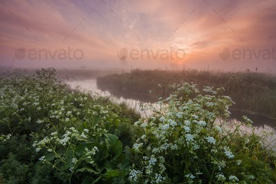 Misty dawn on the river bank with flowers