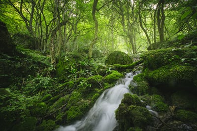 Wild green forest with waterfall
