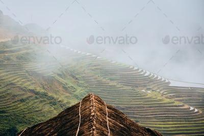 Rice terraced field