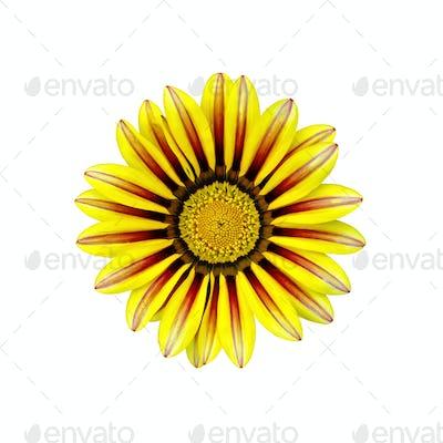 Gacaniya yellow