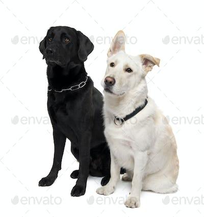 couple of Bastard