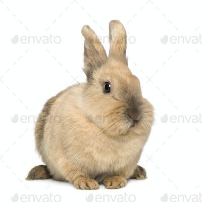 Rabbit (4 years)