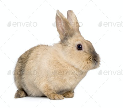 Rabbit (3 years)