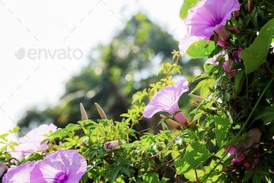 Purple flower on fence