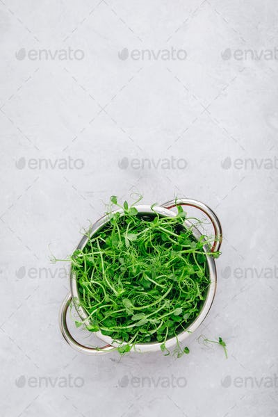 Fresh raw organic green pea shoots in colander, top view