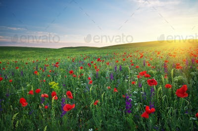 Spring meadow.