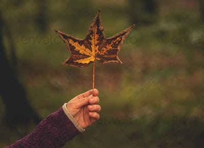 Woman holding autumn leaf in the forest