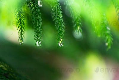 Rain drop at green laef