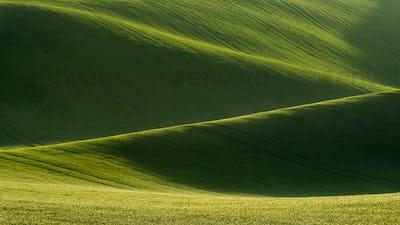 Detail of South Moravian field, Czech republic.