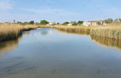 Pond with pampas grass in Aigues Mortes, France