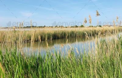 Pond near medieval village of Aigues Mortes, France