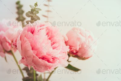 Beautiful bouquet from pink peonies. The concept of celebration and love. Copy space.