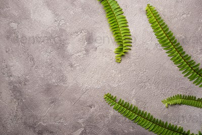 Background with green fern leaves.