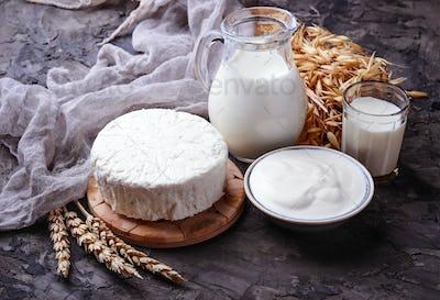 Tzfat cheese, milk and wheat grains. Symbols of judaic holiday Shavuot