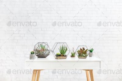 Composition of succulent plants