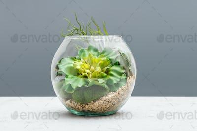 Succulent plants in florarium