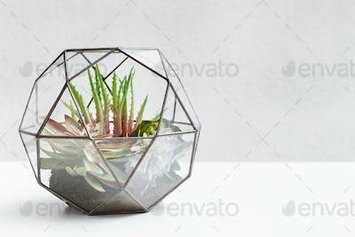 Home garden concept