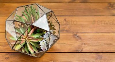 Mini succulent garden concept