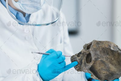 Ancient DNA Scientist Working in Bio Archaeology Lab