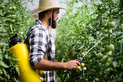 Spaying vegetables with water or plant protection products such as pesticides against diseases