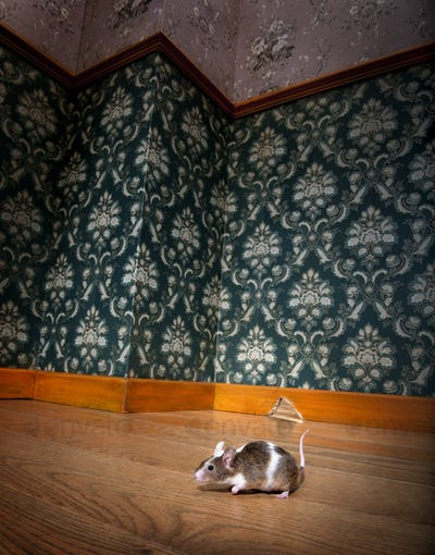 mouse walking in a luxury old-fashioned roon
