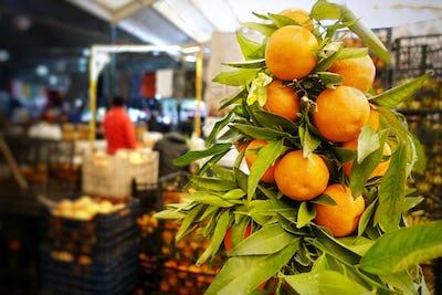 Fruit Mandarin in Bazaar