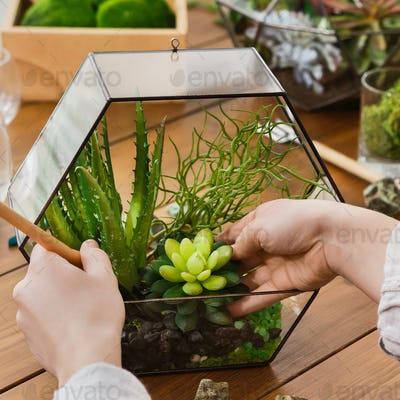 Woman making florarium