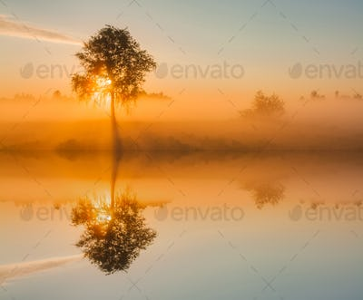 Beautiful foggy spring dawn on a field with trees