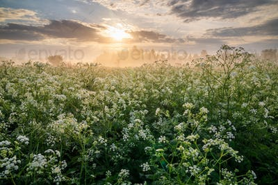 Misty sunrise on the river bank with flowers.