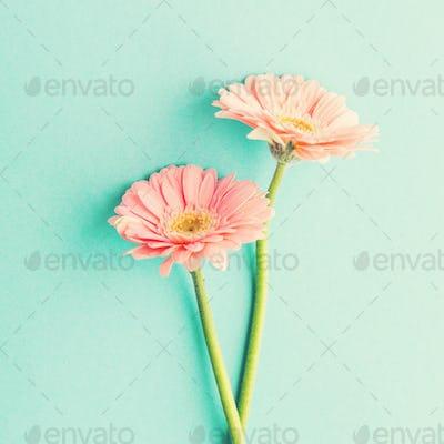 Spring tender flowers on blue