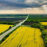 Drone View of Yellow Rape Seed Fields