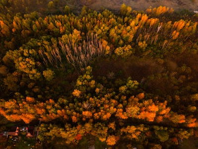 Autumn forest at dawn, aerial view. Autumn landscape.