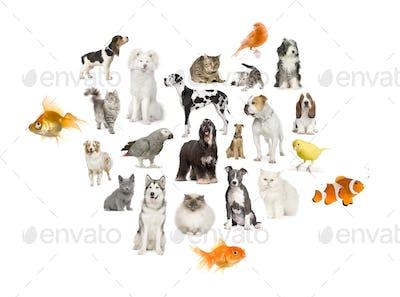 Arrangement of 22 domestic animals