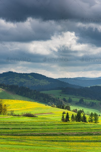 Green and yellow blooming pasture meadows and Pieniny mountains,