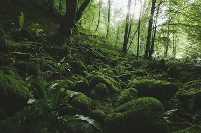 Jungle with green moss background
