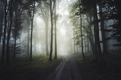 Road through enchanted mysterious forest with fog